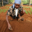 Woman plants seeds.