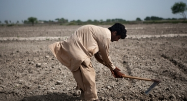 A community volunteer in Thatta District, Pakistan works in the fields. Photo: ACF-Pakistan, L. Tomassini