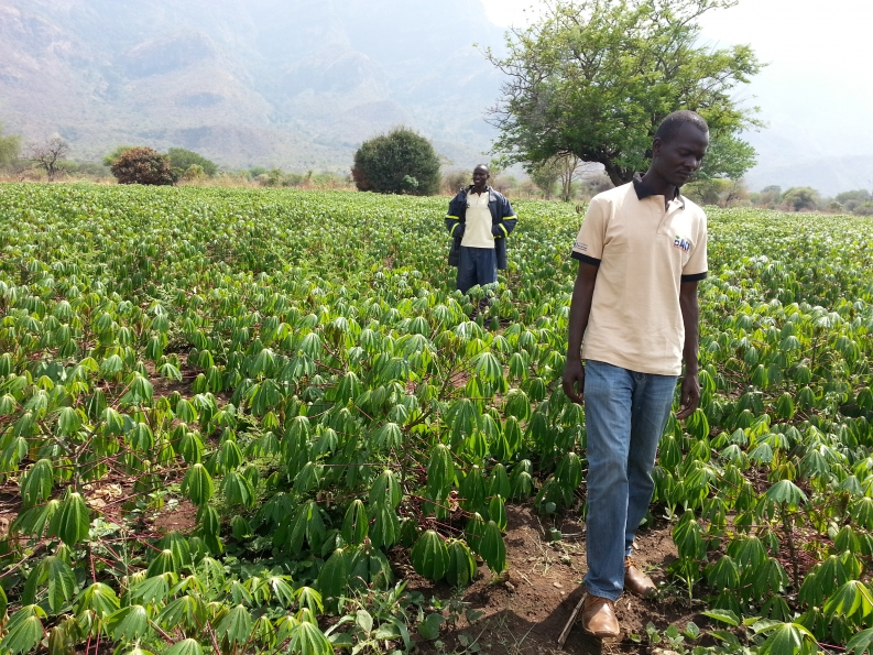 Rajab Angolere stands in his cassava fields with an Action Against Hunger team member. Photo: ACF-Uganda