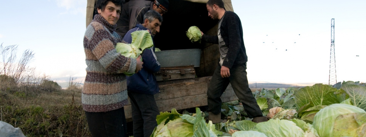 Action Against Hunger supports income-generating activities like cabbage farming.