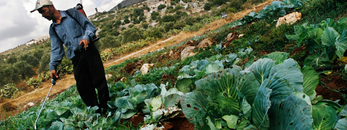 Action Against Hunger helps farmers like this man rehabilitate crops affected by conflict in Lebanon.