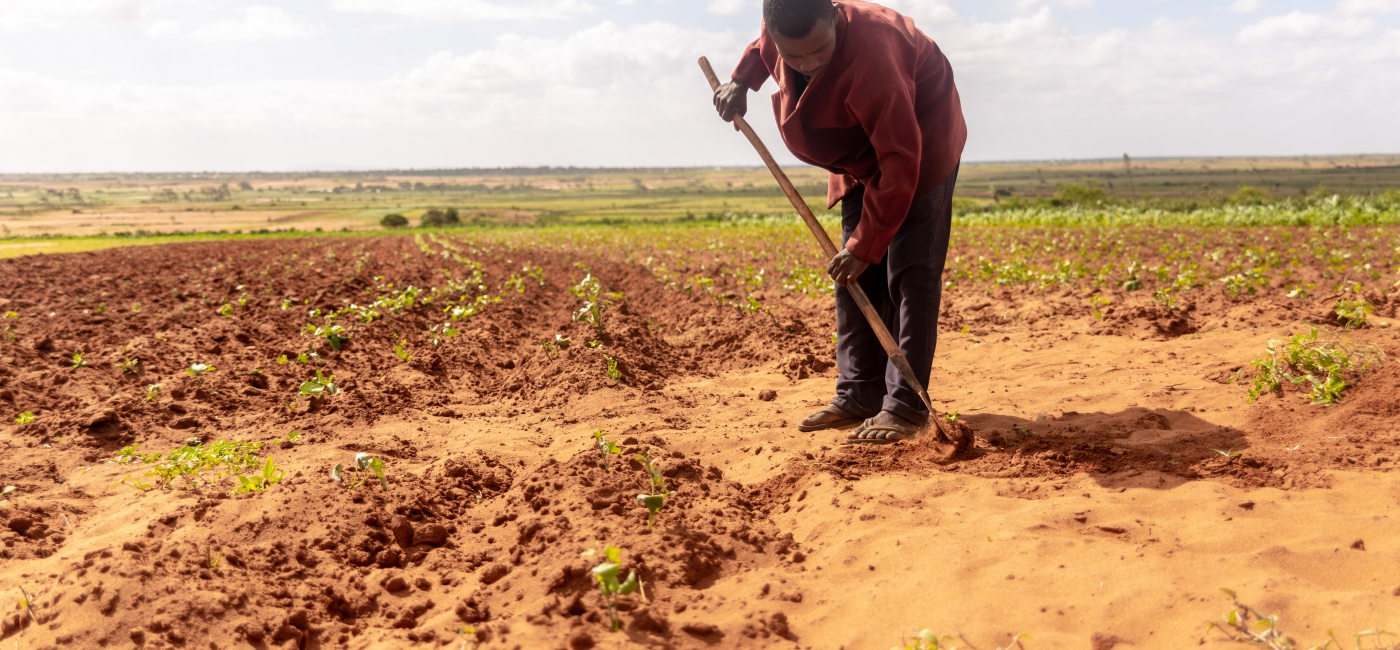A farmer works in his parched fields.