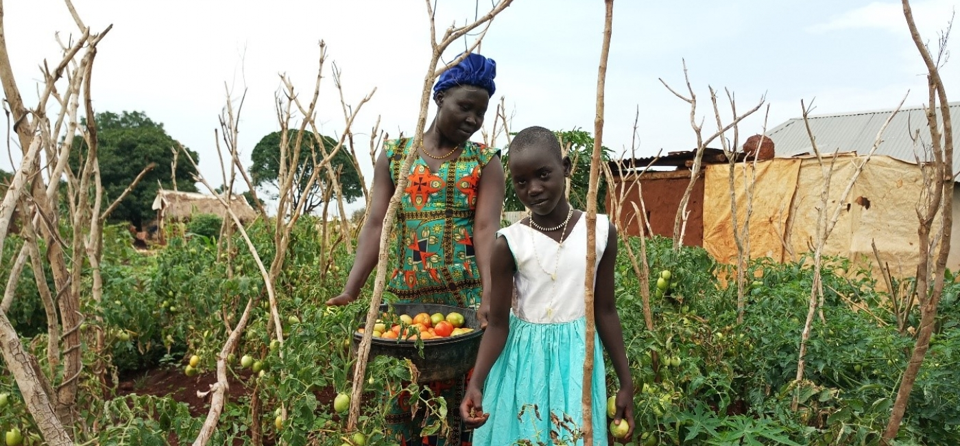 Agnes, a farmer in Uganda, harvests a crop of tomatoes with her daughter.